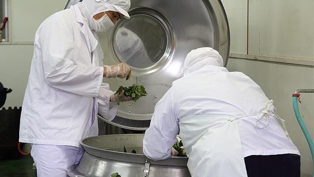 大和当帰葉は食用と同じ高い品質栽培されています